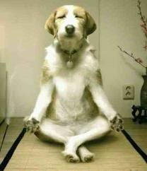 Happy meditator